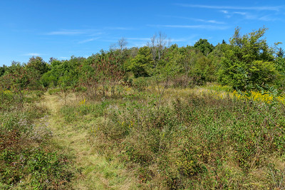 Fork Mountain Trail -- 5,450'