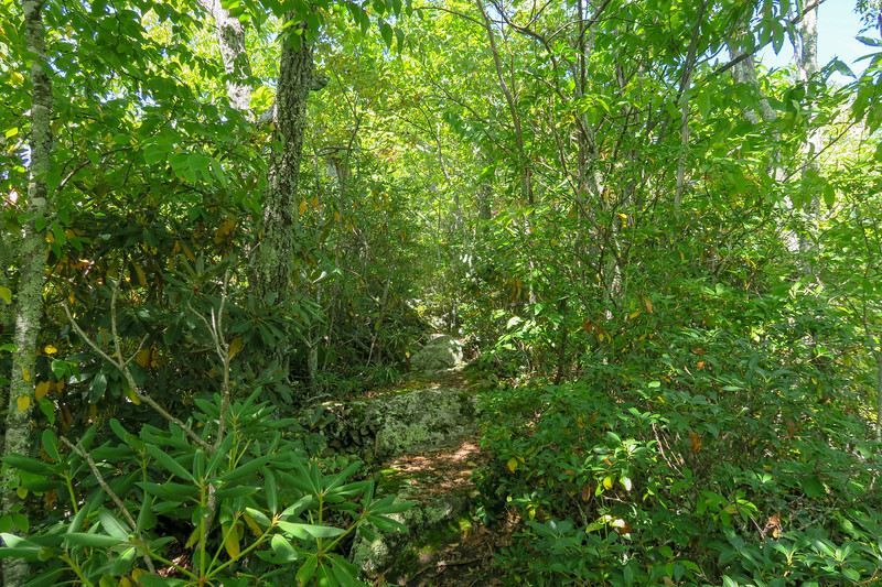 Fork Mountain Trail -- 5,030'