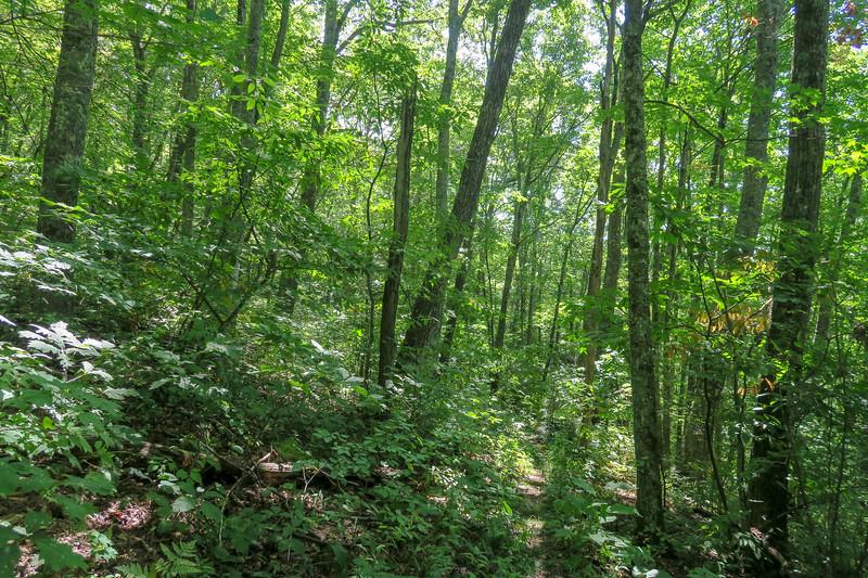 Fork Mountain Trail -- 4,850'