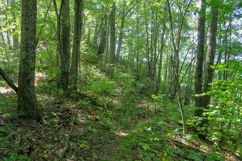 Fork Mountain Trail -- 4,650'