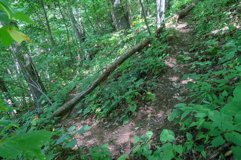 Fork Mountain Trail -- 4,480'