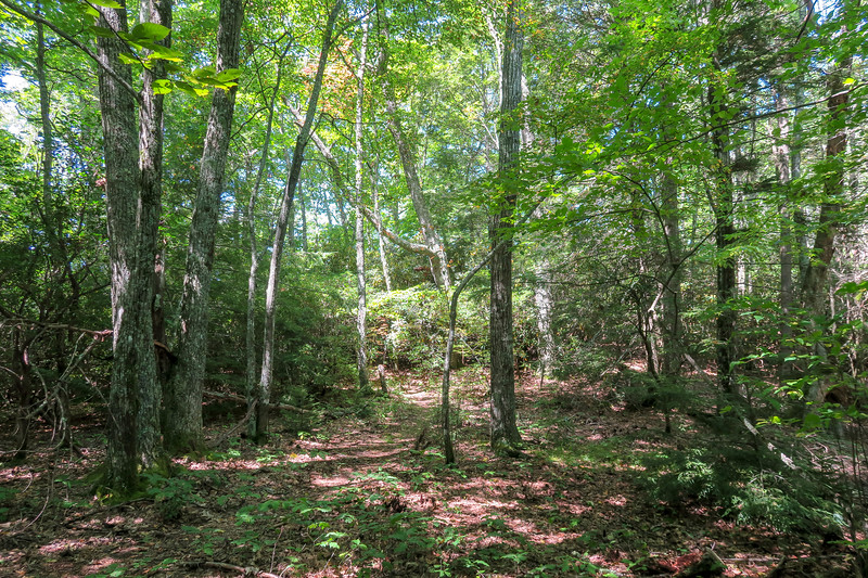 Fork Mountain Trail -- 4,860'