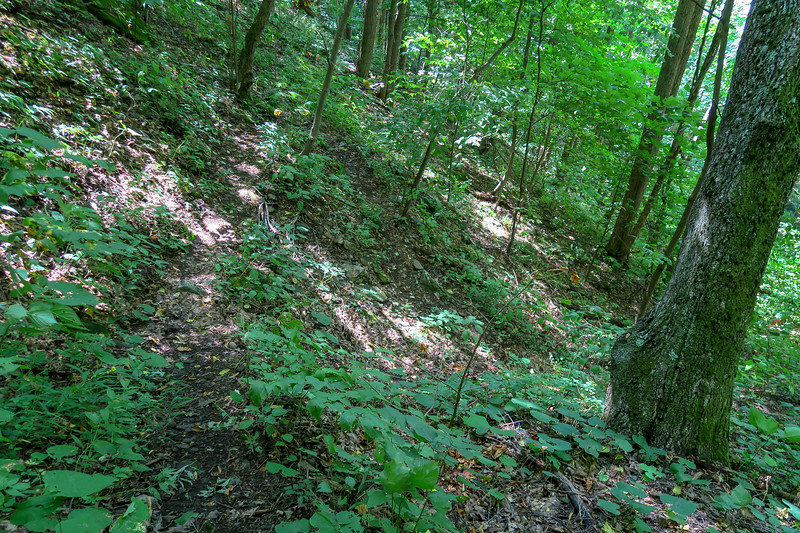 Fork Mountain Trail -- 4,370'