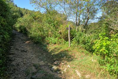 Fork Mountain/Ivestor Gap Trail Junction -- 5,730'