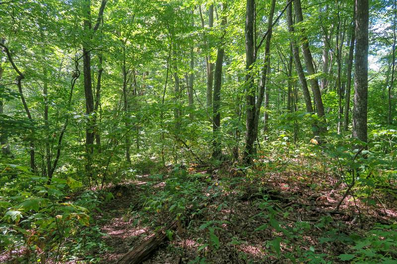 Fork Mountain Trail -- 4,700'