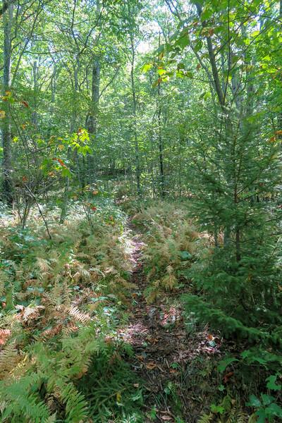 Fork Mountain Trail -- 5,200'