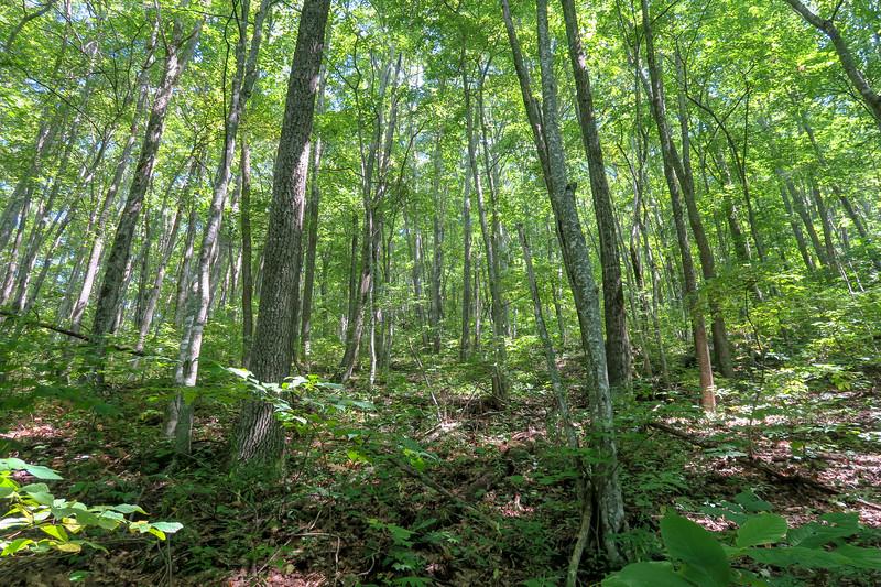 Fork Mountain Trail -- 4,350'