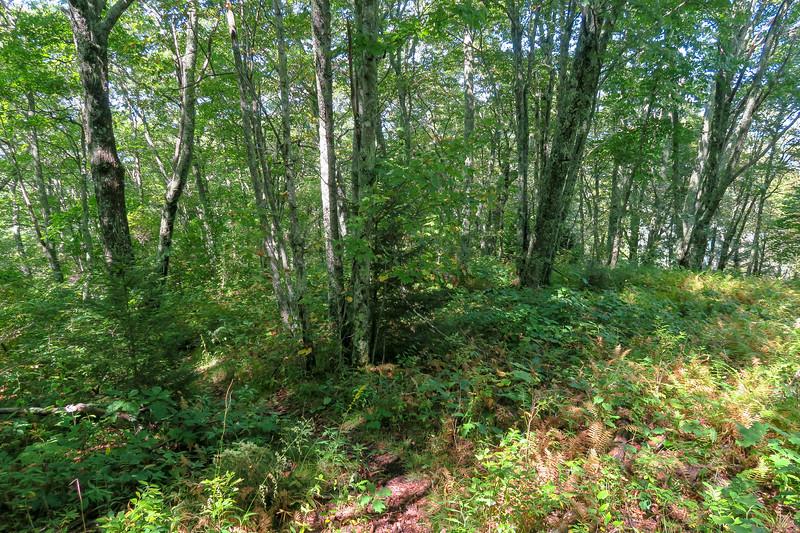 Fork Mountain Trail -- 5,250'