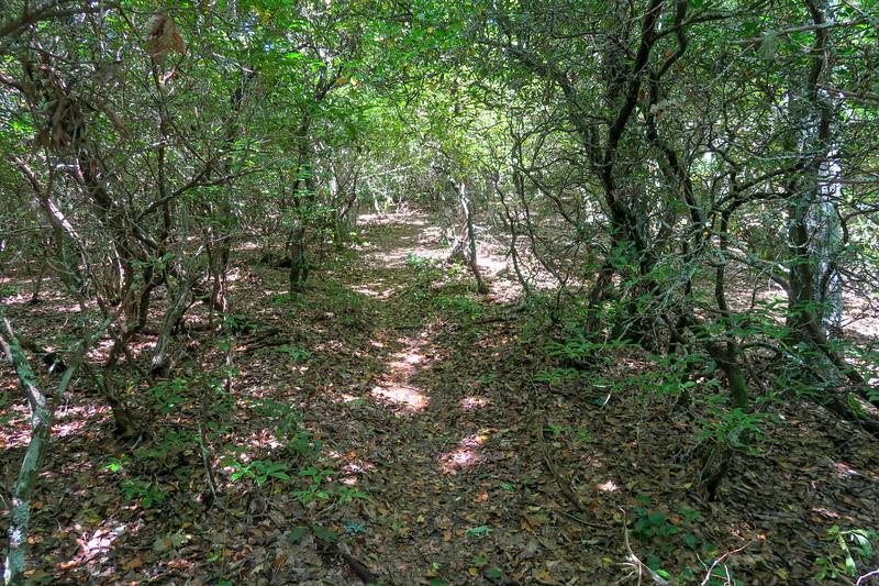 Fork Mountain Trail -- 4,880'