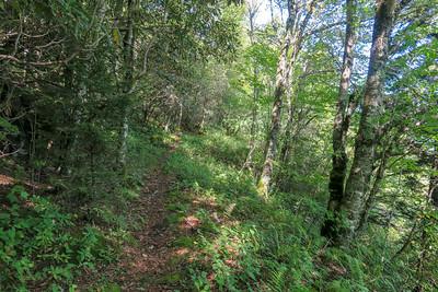 Fork Mountain Trail -- 5,600'