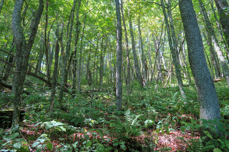 Fork Mountain Trail -- 5,080'