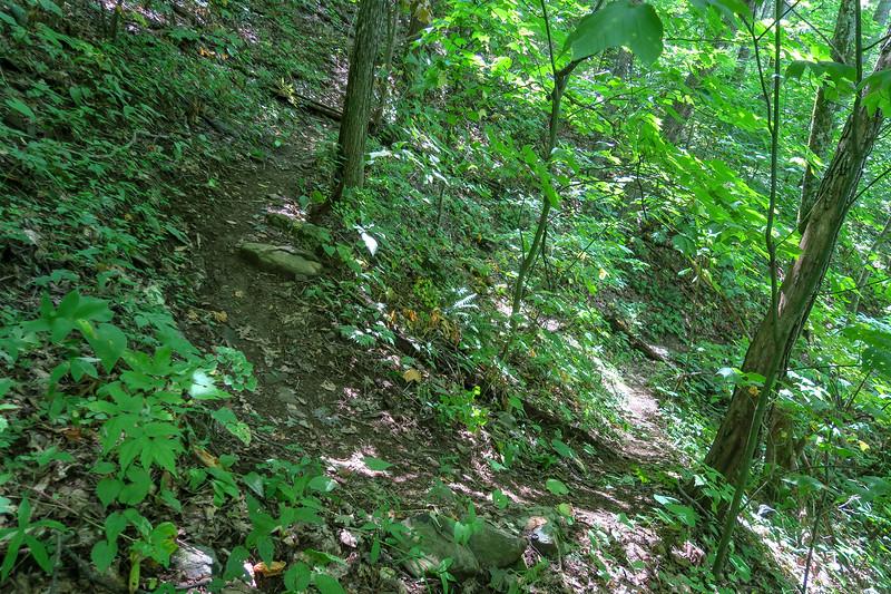 Fork Mountain Trail -- 4,520'