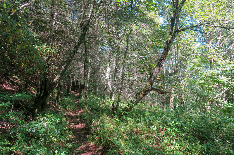 Fork Mountain Trail -- 5,500'