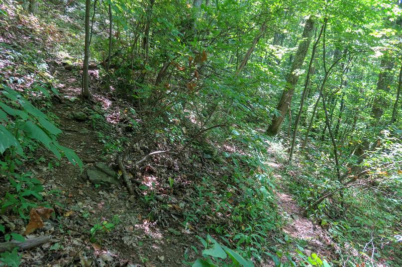 Fork Mountain Trail -- 4,430'