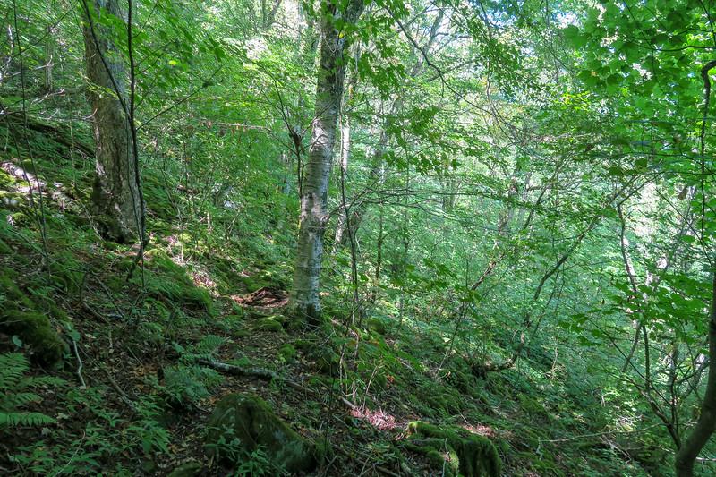 Fork Mountain Trail -- 5,040'