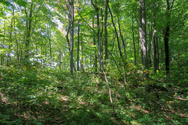 Fork Mountain Trail -- 5,100'