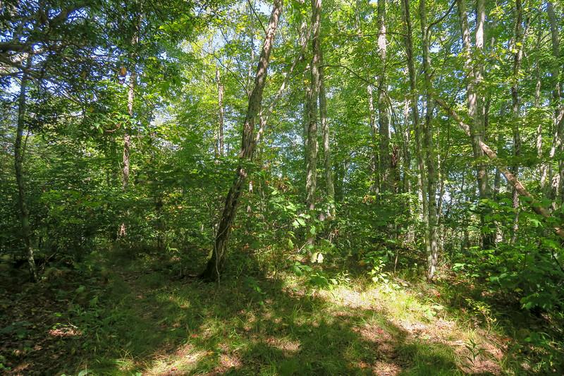 Fork Mountain Trail -- 5,140'