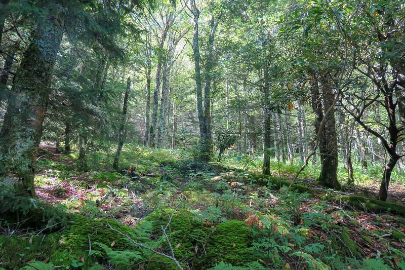 Fork Mountain Trail -- 5,520'