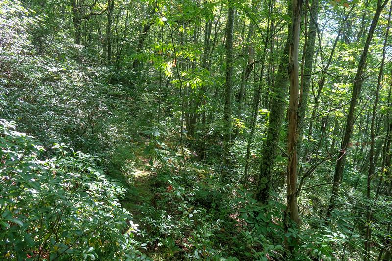 Fork Mountain Trail -- 4,930'