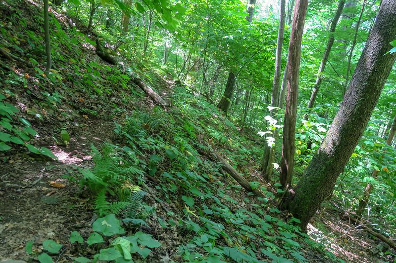 Fork Mountain Trail -- 4,500'