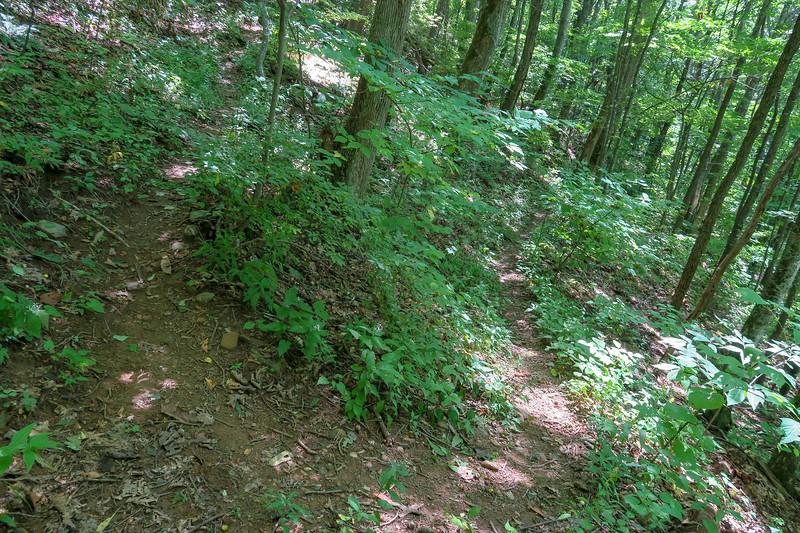 Fork Mountain Trail -- 4,320'