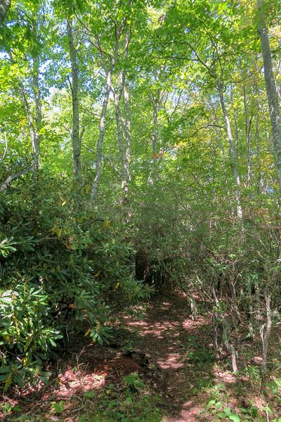 Fork Mountain Trail -- 5,150'