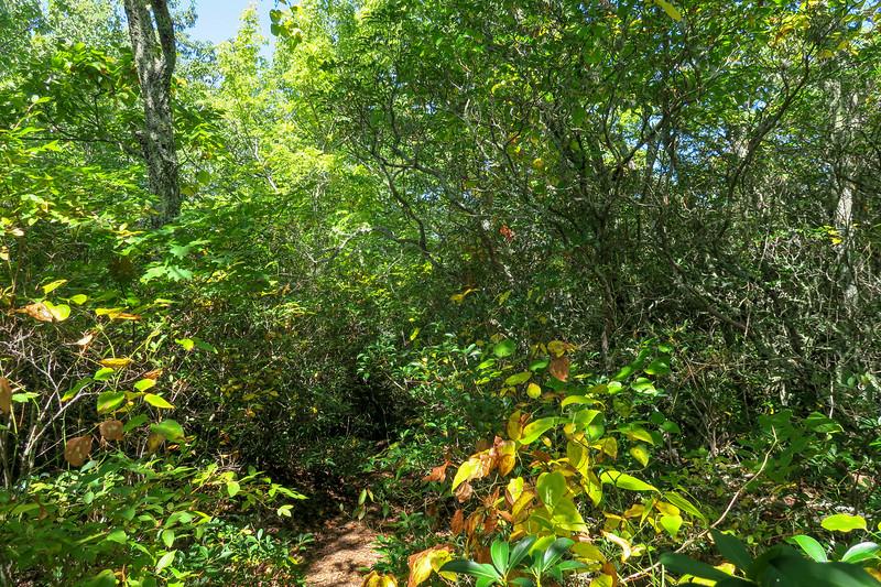 Fork Mountain Trail -- 4,960'