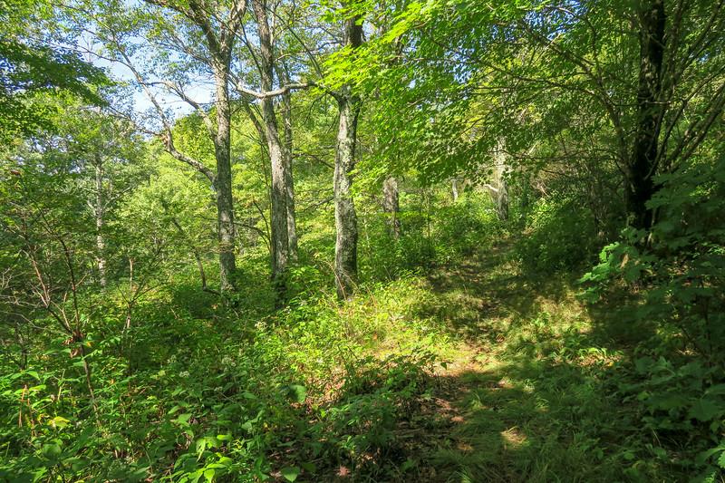 Fork Mountain Trail -- 5,420'