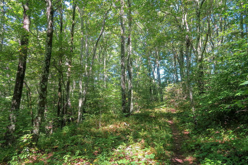 Fork Mountain Trail -- 5,380'