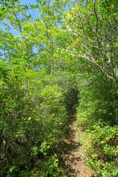 Fork Mountain Trail -- 4,940'