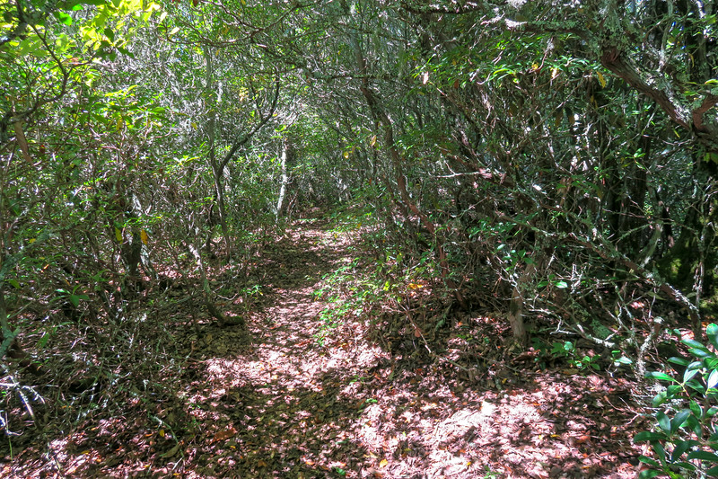 Fork Mountain Trail -- 4,950'