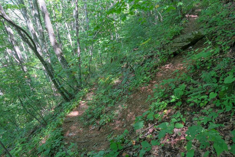Fork Mountain Trail -- 4,550'
