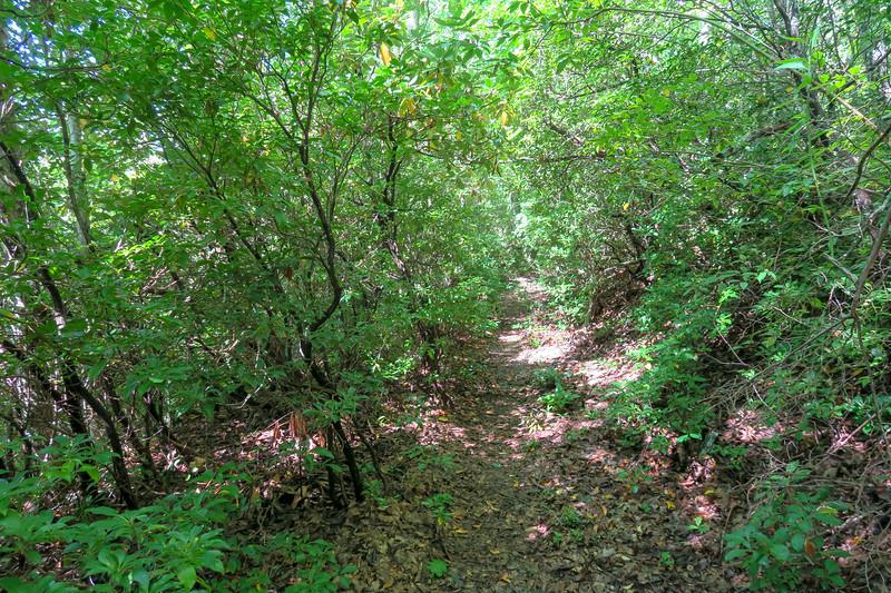 Fork Mountain Trail -- 5,020'