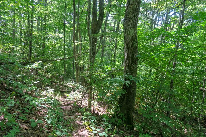 Fork Mountain Trail -- 4,780'