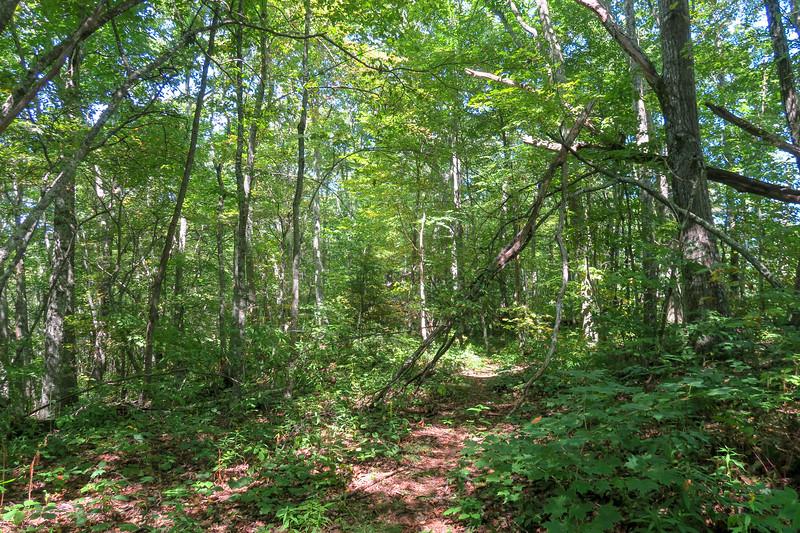 Fork Mountain Trail -- 5,070'