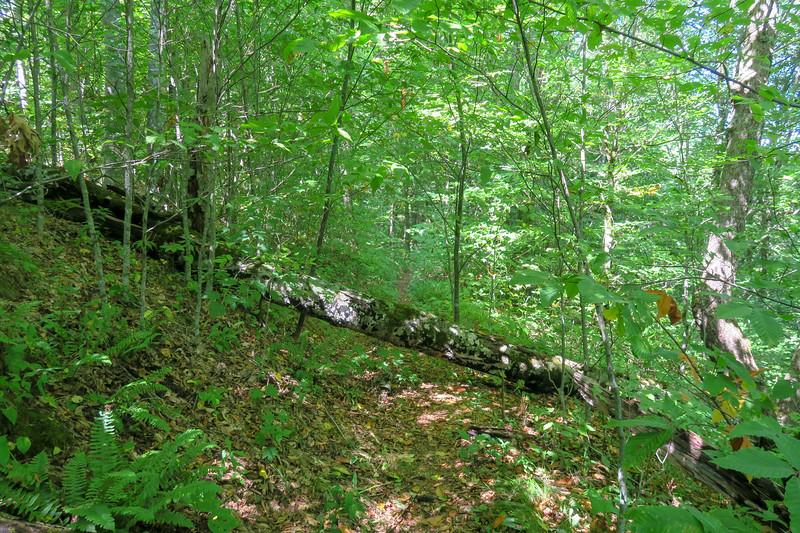Fork Mountain Trail -- 5,120'