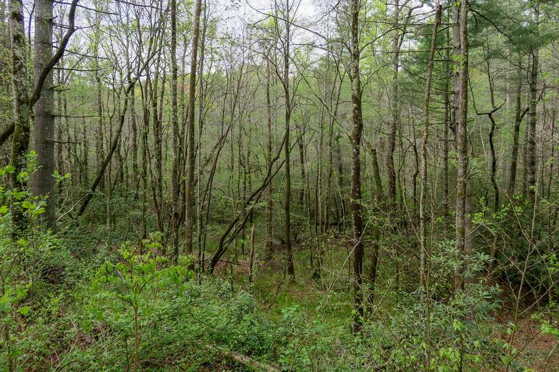 Foster Creek Trail -- 2,290'