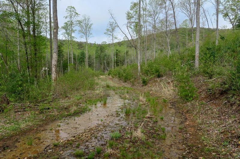 Foster Creek Trail -- 2,280'