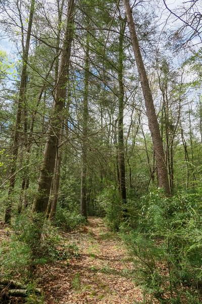 Foster Creek Trail -- 2,240'