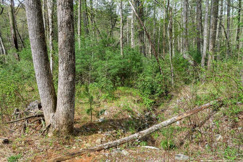 Foster Creek Trail -- 2,250'