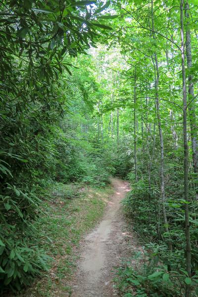 Grassy Road Trail -- 2,420'