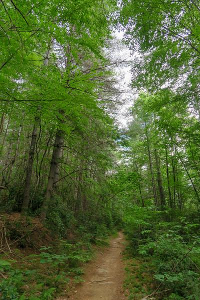 Grassy Road Trail -- 2,580'