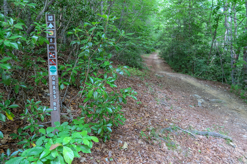 Grassy Road/Thrift Cove Loop Trail Junction -- 2,340'