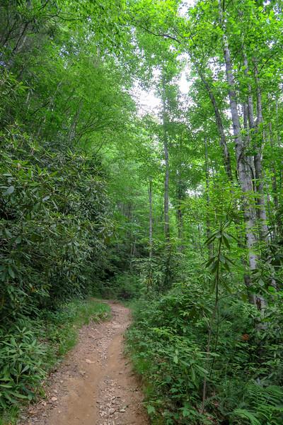 Grassy Road Trail -- 2,450'