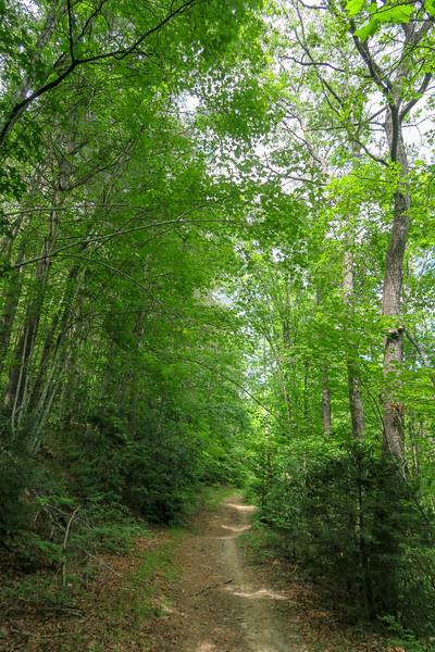 Grassy Road Trail -- 2,380'