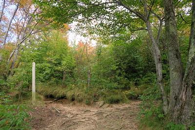 Graveyard Fields Loop/Upper Falls Trail Junction