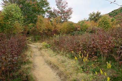 Graveyard Fields Loop/Graveyard Ridge Connector Trail Junction