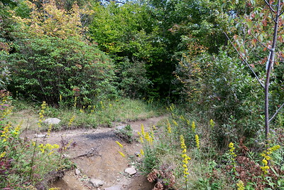 Graveyard Fields Connector/Graveyard Ridge Trail Junction -- 5,230'