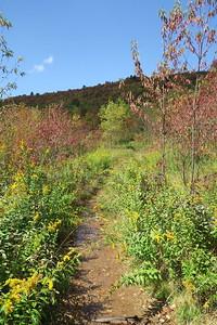 Graveyard Fields Connector Trail -- 5,150'
