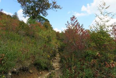 Graveyard Fields Connector Trail -- 5,200'
